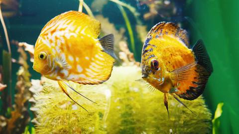 Fish in the aquarium Footage
