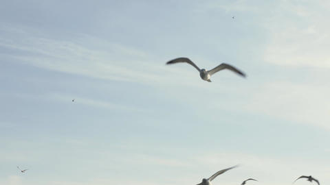 Slow motion shot of a sea gulls flying in the sky Footage