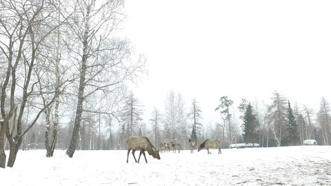 Marals on the field in winter Image