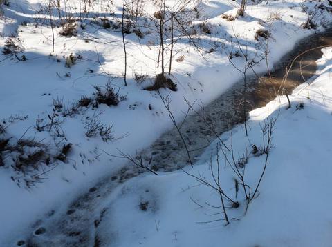 Winter landscape. Dead Creek in a sunny winter day Photo