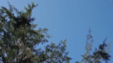 Blue sky and moon Footage