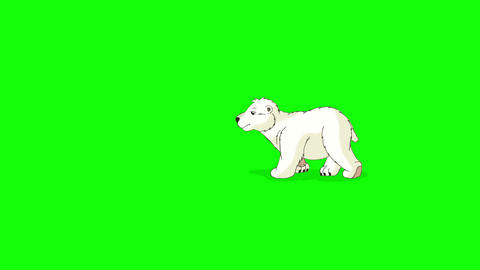 Little Polar Teddy Bear Walks Chroma Animation