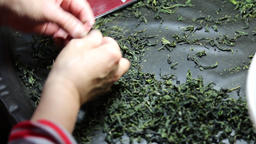 Sorting dried tea leaves Taiwan Bild