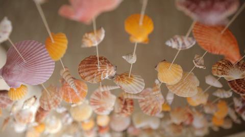 Mollusk Shells Live Action