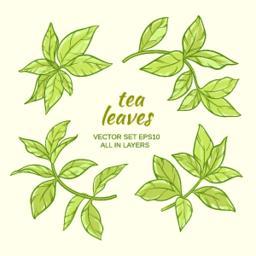tea_leaves02_1 Vector