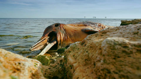 Dead dolphin Bild