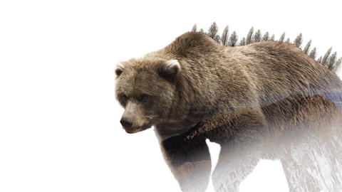 Double exposure walking bear Animation