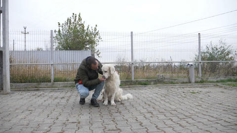 Slow motion of a white beautiful dog receiving treats from his owner after being Footage