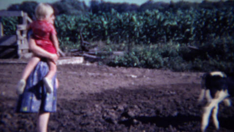 1963: Mom baby approach farm cow calf runs away from the madness Footage