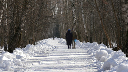 Happy Couple Walking In The Winter Forest Footage