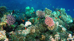 069907225-floating-over-lively-coral-ree PRORESHD1080 Archivo