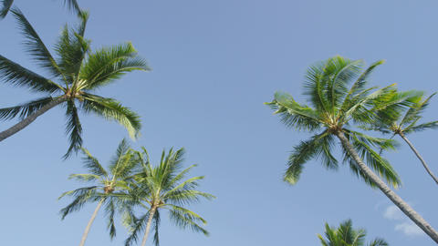 Palm trees and clear blue sky on tropical beach Live Action