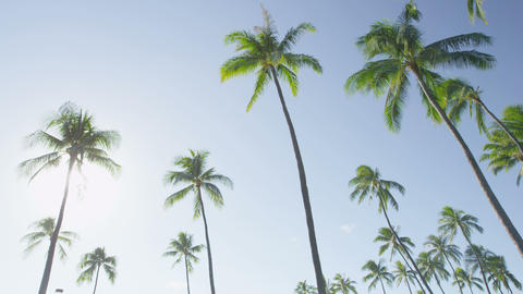 Palm trees palms on tropical beach on blue sky ビデオ