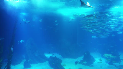 Underwater life of a coral reef. Sharks, rays and other fish. Large aquarium Live Action