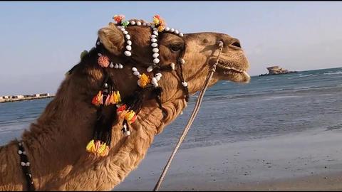 Camel Footage