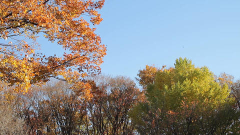 Fallen Leaves / Autumn Colors / Wind / Blue Sky - Fix Bild