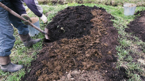 Man digs up the ground with manure for planting, 4k Footage
