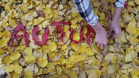 TimeLapse. word autumn from red leaves by the hands of a girl Archivo