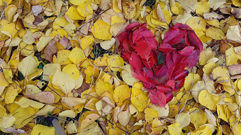 TimeLapse. Background in the form of heart from autumn leaves Acción en vivo