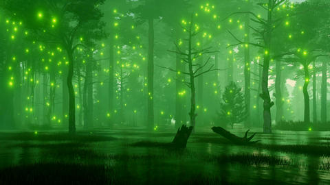 Fairy lights on a fantasy night forest swamp Animation