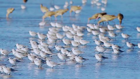 4K a lot of birds ビデオ