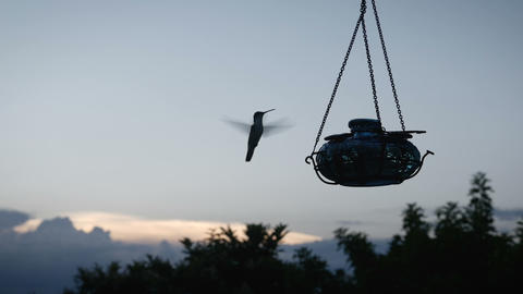 Silhouette of a hummingbird feeding at sunset in slow motion 영상물