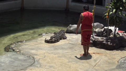 crocodile with trainer Footage