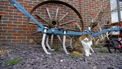 Panning shot of a cat in front of old fashioned farm equipment Footage