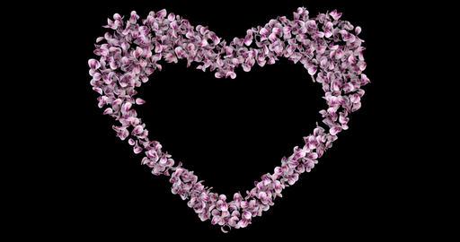Pink Rose Sakura Flower Petals In Heart Shape Alpha Matte Placeholder Loop 4k Animation