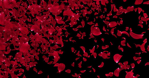 Flying Light Red Rose Flower Petals Falling Transition Alpha matte Loop 4k Animation