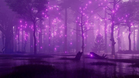 Magical lights on creepy night forest swamp CG動画素材