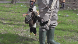 Hunter with ducks,slow motion Footage