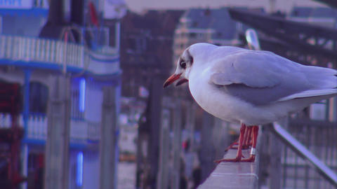 Seagulls at Landungsbruecken Hamburg close up shot - HAMBURG, GERMANY DECEMBER 2 Footage
