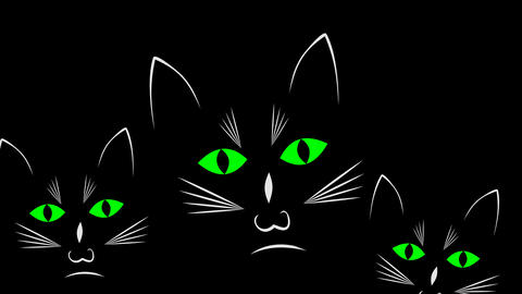 Three curious black cats in darkness animation, 4k video Animation