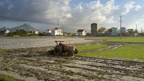 Peasant on Tractor Ploughs Long Watered Field under Sun 영상물