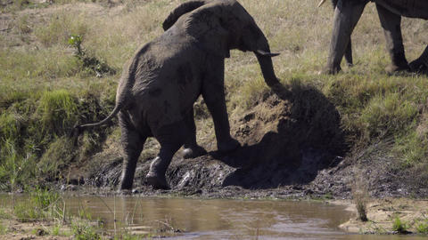 Two elephants interact on a river bank Image