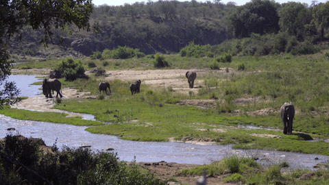 River bank with herd of elephants Footage