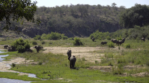 River bank with elephants grazing nearby Footage