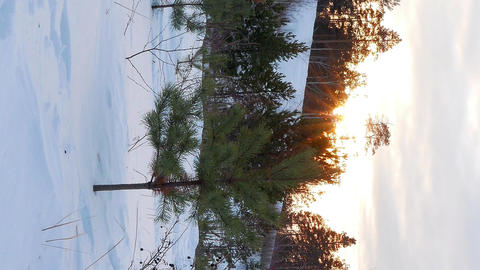 Vertical video. Sun sets behind the trees. Camera moves Footage