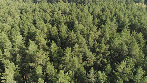 Background beautiful green wild forest aerial view Image