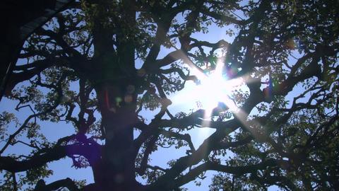 sunlight filtering through trees KOMOREBI Archivo