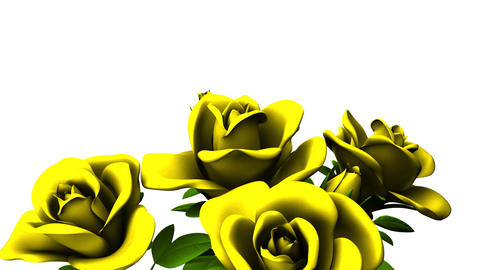 Yellow Roses Bouquet On White Text Space CG動画