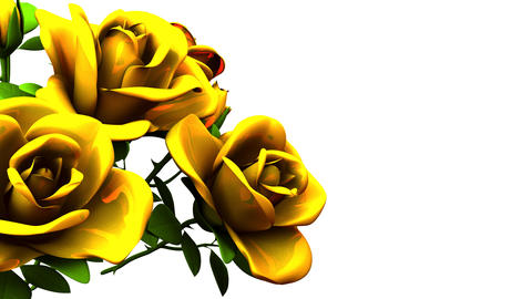 Yellow Roses Bouquet On White Text Space Animation