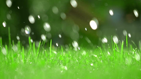 Green grass and falling drops of water, shallow focus. Super slow motion video Footage