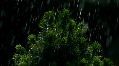 Small pine and falling drops of water at night. Super slow motion video, 500 fps Footage