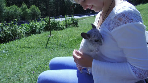 gray chinchillas in the arms of a teenager Live Action