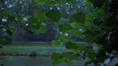 Rain is falling down in Slow Motion Footage