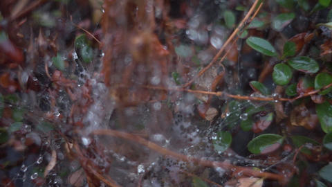 Spider web in the rain Footage