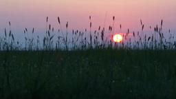Landscape, Field, Sunset, Evening, Ears stock footage
