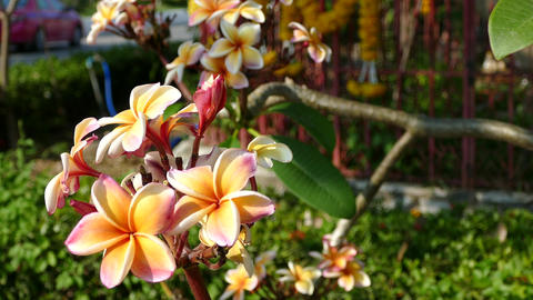 Beautiful flowers with spirituality flower garland at the... Stock Video Footage